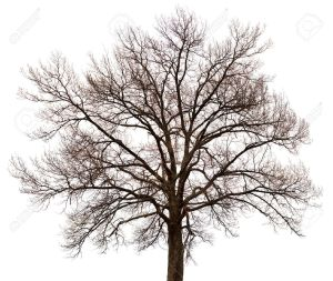 14766701-a-silhouette-of-a-tree-isolated-on-white-background