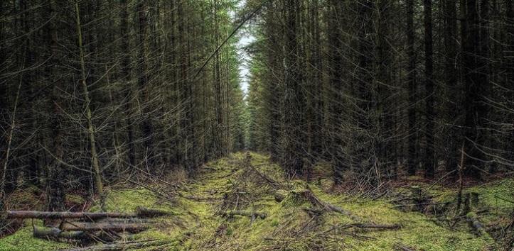 Deville-Forest-Blog