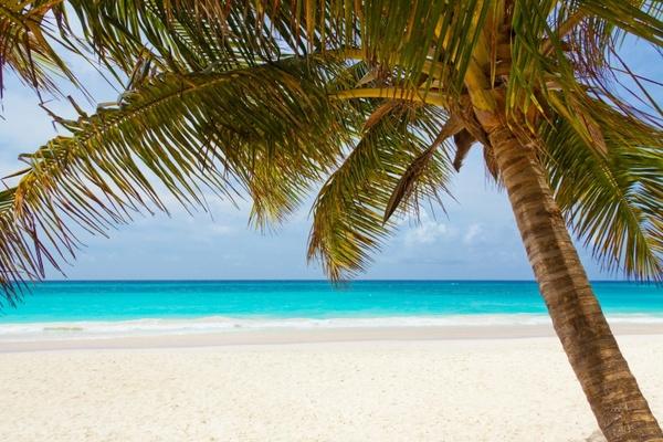 tropical_palm_tree_204976